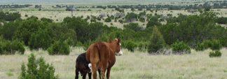 $2,710,000 WagonMound Ranch4,927 +/- Deeded AcresMora & Harding County, NM.